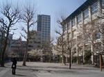 柳北小学校1