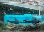 鳥羽水族館18